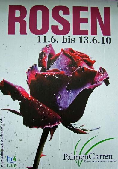 palmengarten im monat juni rosen und lichterfest 2009. Black Bedroom Furniture Sets. Home Design Ideas